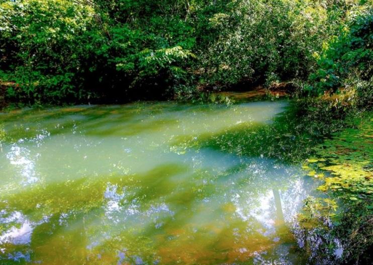 Los humedales de Villavicencio se están muriendo