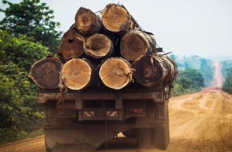 Capturados sujetos que talaron 1600 hectáreas de bosque en el Llano