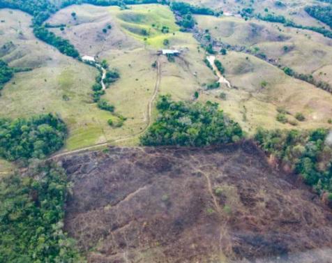 $20 millones ofrecen como recompensa por autores de la deforestación