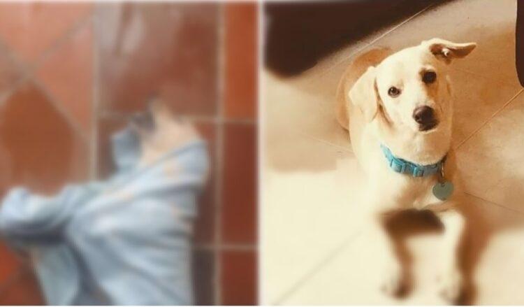 Denuncian masivo envenenamiento de mascotas en Villavicencio