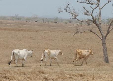 Se acerca fuerte sequía en la Orinoquia: Ideam