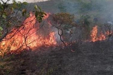 6.300 hectáreas de naturaleza quemadas y taladas